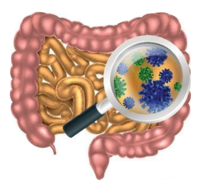 Illustration of a gut microbiome